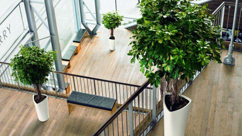 Dekorasi Ruang Pejabat Kecil Menarik 12 Jenis Pokok Yang Sesuai Diletakkan Di Dalam Rumah Dan Pejabat