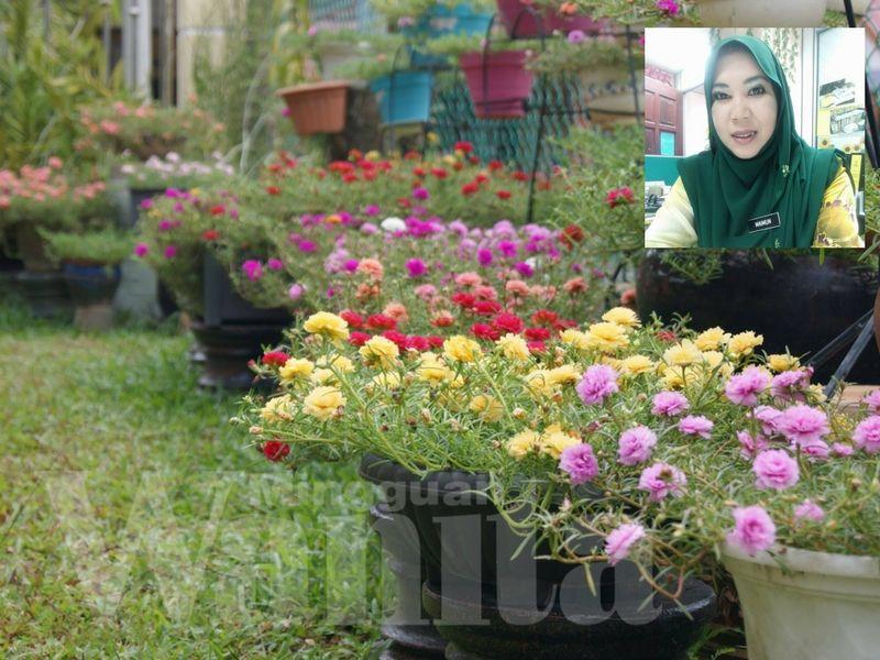 Hiasan Dalaman Rumah Ala Jepun Terbaik Kelab Peminat Rose Jepun Ini 3 Cara Mudah Nak Bagi Bunga Merimbun