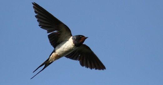 Batal lesen burung walit jika ingkar