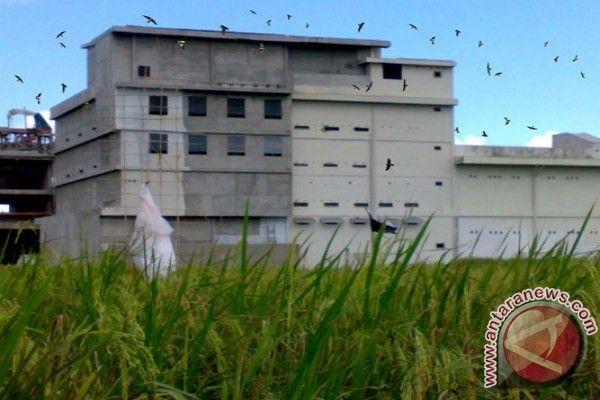 Pelan Rumah Sarang Burung Walet Power Hal Penting Sebelum Membuat Rumah Burung Walet