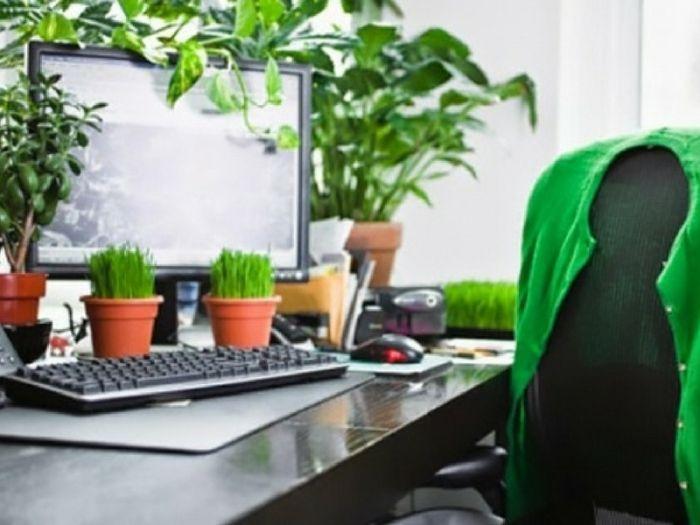 Dekorasi Hiasan Dalaman Terbaik Bilik Pejabat Meletup Hias Meja Pejabat Dengan Seleksi Tanaman Mini Ini Tip Petua