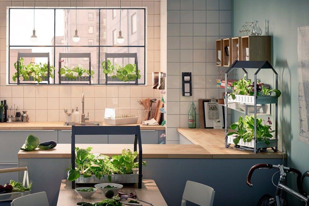 Dekorasi Hiasan Dalaman Terbaik Rumah Flat Kecil Hebat Ingin Punya Taman Minimalis Di Dalam Rumah Ini 9 Hal Yang Harus