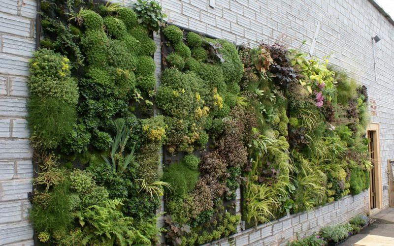 Cara Untuk Deko Dinding Luar Rumah Baik Rumah Sempit Gunakan Dinding Polos Untuk Dekorasi Vertical Garden
