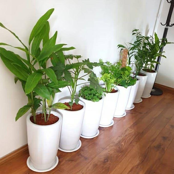 Kini dengan kemudahan pembelian pokok hiasan secara online dari