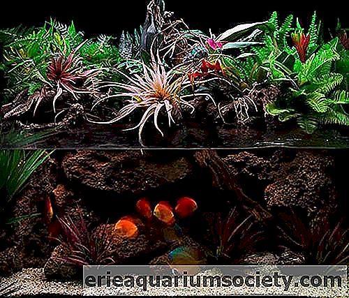 Dunia bawah laut di atau di pejabat adalah sejenis gambar hidup ini merupakan cara untuk menekankan keperibadian pedalaman Reka bentuk Aqua adalah