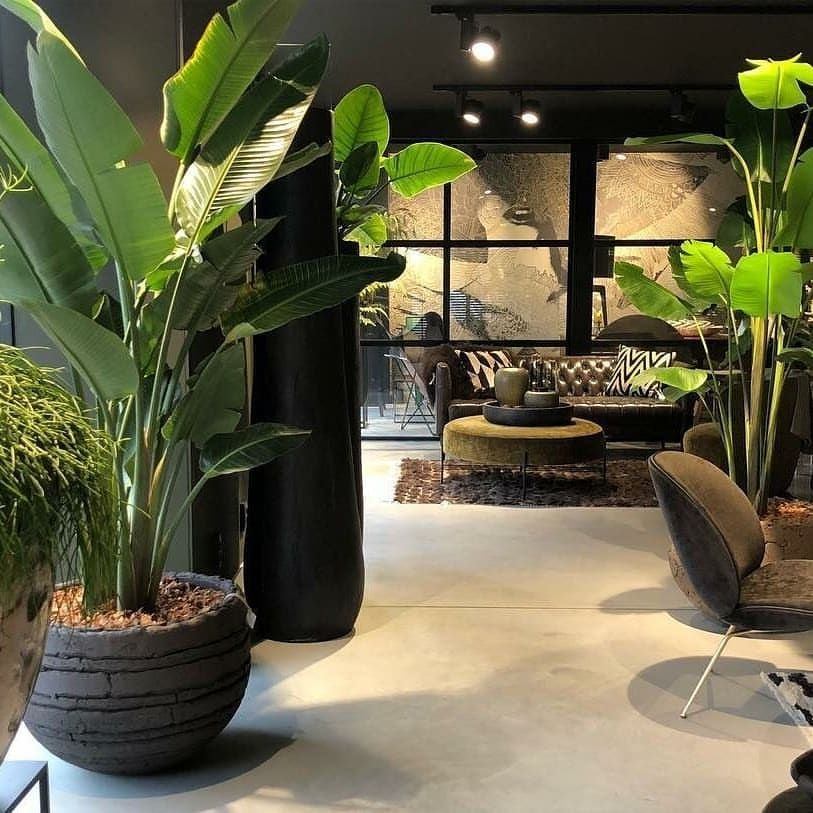 Keindahan pokok hiasan hijau hidup segar yang diletakkan indoor untuk hiasan Studio Boutique